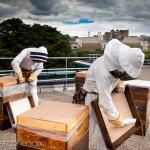 Reportage magazine -Rucher sur les toits de Sciences Po 1