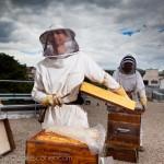 Reportage magazine -Rucher sur les toits de Sciences Po 2