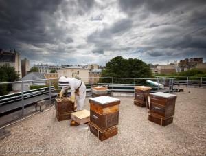 Reportage magazine -Rucher sur les toits de Sciences Po 3