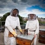Reportage magazine -Rucher sur les toits de Sciences Po 4