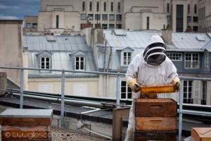 Reportage magazine -Rucher sur les toits de Sciences Po 5