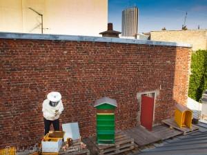 Reportage magazine -Rucher sur les toits de l'église protestante de l'étoile 3