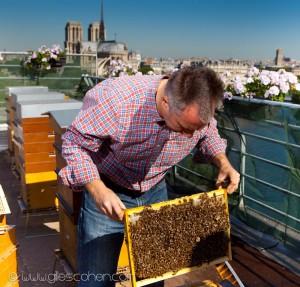 Reportage magazine -Rucher sur les toits de la Tour d'Argent 2