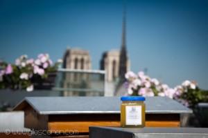Reportage magazine -Rucher sur les toits de la Tour d'Argent 3