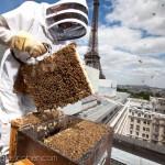 Reportage magazine -Rucher sur les toits de l'hotel Pullman 1